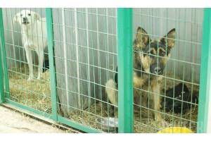 Платная передержка собак в Москве: что нужно знать каждому владельцу четвероногого друга?