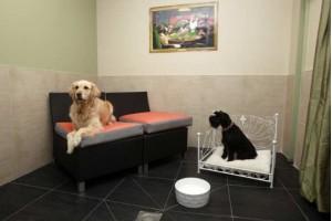 Подробная инструкция, где оставить собаку на время отъезда