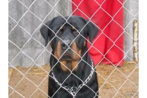 Платная передержка собак – что это такое и что входит в стоимость содержания