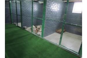 Как выбрать платную передержку собак в Москве?