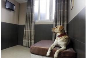 Как правильно подготовиться к отпуску и куда отдать собаку на передержку
