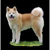 Дрессировка Акита ину коррекция поведения и воспитание щенка