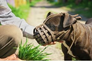 Как выбрать намордник для собаки по размеру: правила измерений, схема и советы