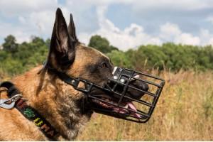 Как привить собаке спокойное отношение к наморднику