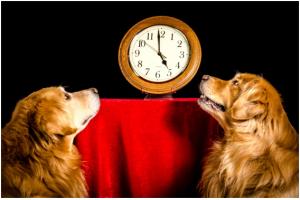 Собака хулиганит, когда одна дома: приучаем питомца к одиночеству