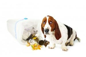 Отучаем собаку подбирать еду с земли: эффективные уловки от профессионалов