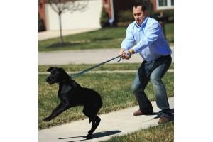 Почему собака натягивает поводок: причины и способы коррекции поведения