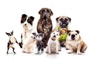 Какие породы собак легче всего дрессировать и почему