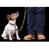 Дрессировка собак на передержке