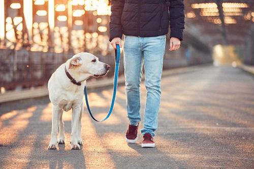 научить щенка не тянуть поводка самостоятельно