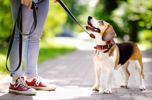как отучить собаку тянуть и дергать поводок