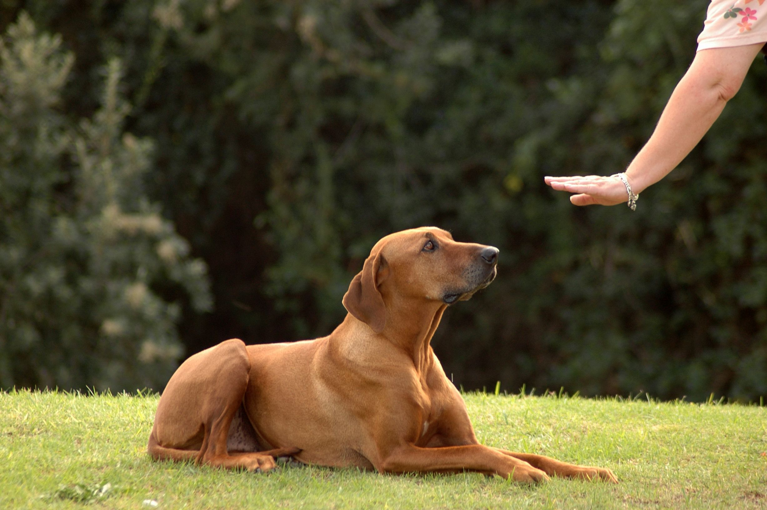 самые простые для дрессировки породы собак