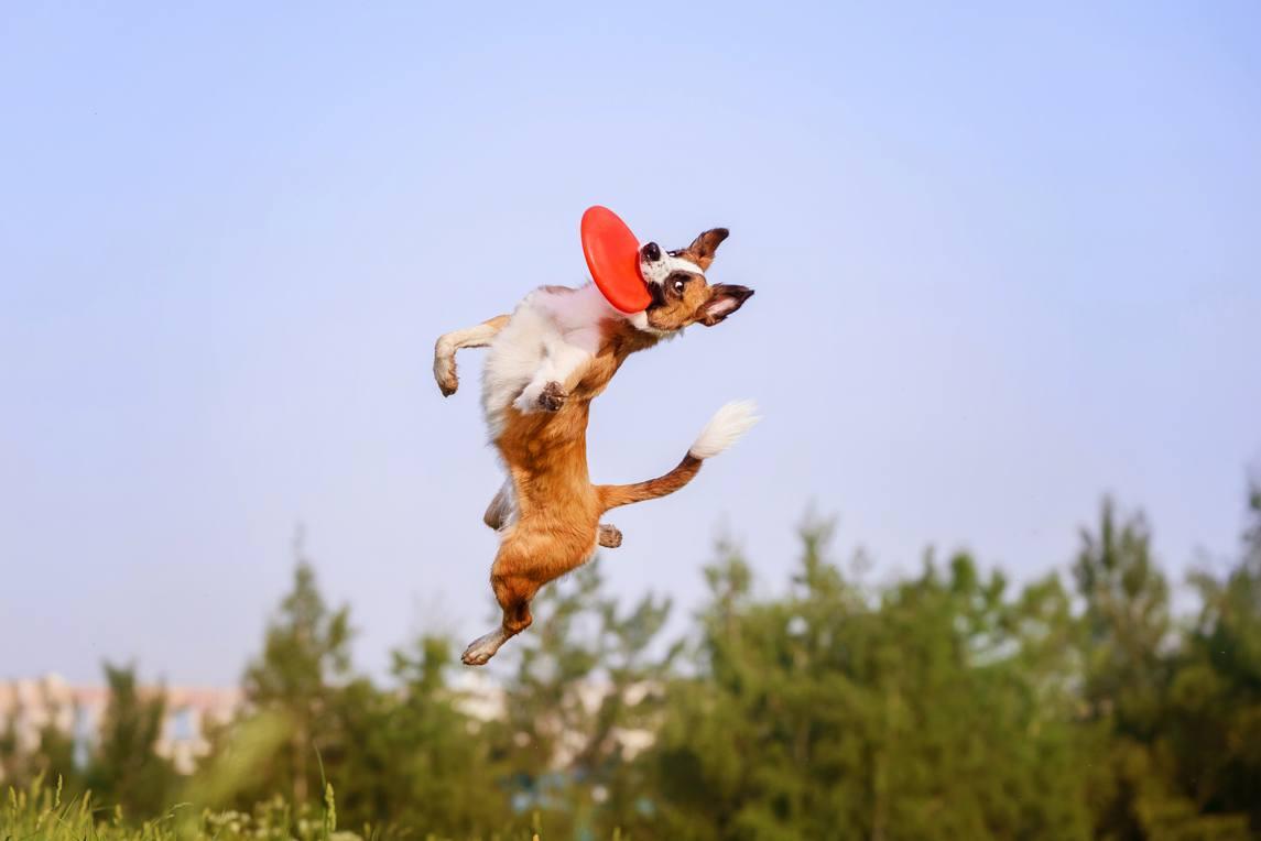 Породы собак которые легко поддаются дрессировке: наиболее обучаемые