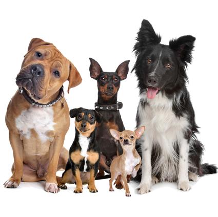 Центр дрессировки и воспитания собак челябинск отзывы