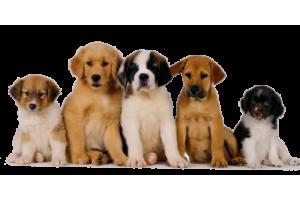 Кормление собак. Рекомендации и правила